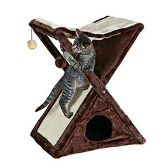 Furniture & Scratch - Cat