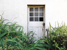 rustic white wall with door and green ferns growing in front photographed by…