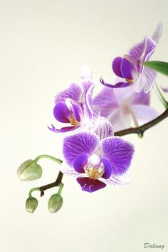 Pretty Little Purple Orchids. Mine is not as pretty, but they still live...