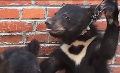 Video Footage Exposes The Suffering Circus Animals Endure Behind The Scenes | Care2 Causes