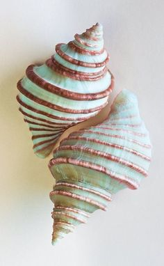 #seashells celia basto | 100% art