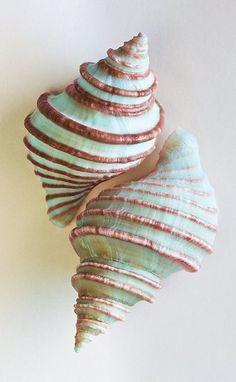 #seashells celia basto | 100% art