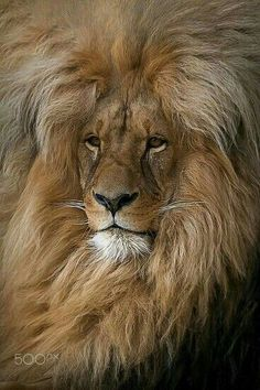 Image result for lion strength quotes