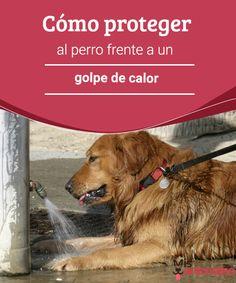 Cómo proteger al perro frente a un golpe de calor  El golpe de calor puede traer graves consecuencias para tu perro. Por tal motivo, debes estar atento y saber cómo actuar para protegerlo. #proteger #perro #calor #consejos