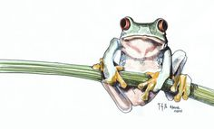 #animalmarch A Tree frog, ink and watercolour sketch. #thedailysketch #animals #March #frog