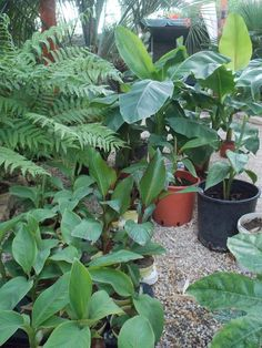 Banana, Plants, Bananas, Plant, Fanny Pack, Planets