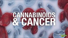 British Study: Cannabinoids May Combine To Effectively Treat Cancer   Medical Jane