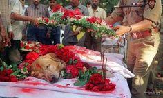 m março de 1993, a cidade de Mumbai sofreu um ataque terrorista, onde 12 bombas deixaram mais de 200 mortos e algo em torno de 700 feridos. Mas tudo poderia ter sido muito pior caso um labrador, chamado Zanjeer, não tivesse encontrado mais de 3 toneladas de explosivo, 600 detonadores, 240 granadas e mais um monte de munição. Graças a ação desse cachorro, milhares de pessoas estão vivas hoje em dia. Porém, infelizmente, no ano 2000, esse herói de quatro patas faleceu. Em seu enterro Zanjeer…