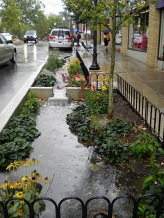 Lovely urban rain garden. I would have jammed a bunch of Juncus sp (rushes) and Carex sp (sedges) in the lowest part of the garden which can tolerate the heaviest water levels.