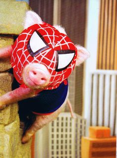 Spider Pig Spider Pig does whatever a Sprider Pig does