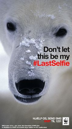 WWF Denmark and Turkey on Snapchat: Don't let this be my #Lastselfie. Endangered animals: Polar Bear.
