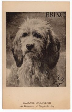 A SHEPHERDS DOG SHEEPDOG OLD DOG PICTURE POSTCARD