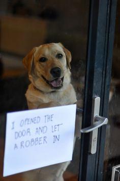 funny dog shaming you had one job Funny Animal Pictures, Dog Pictures, Funny Animals, Cute Animals, Animal Pics, Animals Dog, Funny Images, Funny Shit, The Funny