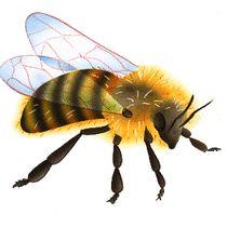 Les abeilles - illustration 4                              …                                                                                                                                                                                 Plus