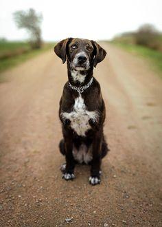 The portrait of my dog / / D Bunn