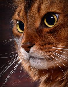 Terrific Screen cats and kittens kitty Concepts After you deliver a different kitten directly into your house, it becomes an enjoyable time, and for most can Animals And Pets, Baby Animals, Funny Animals, Cute Animals, Pretty Cats, Beautiful Cats, Animals Beautiful, Warrior Cats, Kittens Cutest