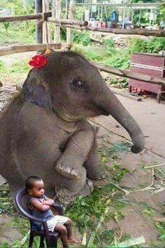 Cute little baby elephant on imgfave - Donna Gilchrist - Photo Elephant, Elephant Love, Baby Elephants, Baby Hippo, Cute Funny Animals, Cute Baby Animals, Animals And Pets, Wild Animals, Nature Animals