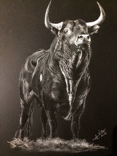 The gaze of the Bull (drawing made with dry pastel) - Modern Ox Tattoo, Taurus Bull Tattoos, Bull Pictures, Bull Painting, Bull Cow, Majestic Animals, Cattle, Beast, Creatures