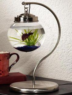 Spectacular Aquariums Personalizing Interior Design With Colorful Glass Fish…