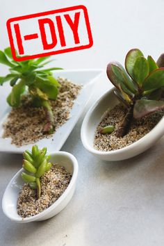 "propogate more succulents (like if a small branch or ""leaf"" falls off, get it to sprout roots to replant)"