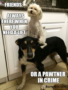 Dog partners in crime