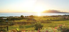 Private Homes Vacation Rental - VRBO 383159 - 3 BR Lahaina House in HI, 180 Degree Unobstructed Ocean&Mountain Views on 6 Acre Farm. Dream Life on Maui
