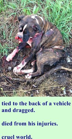 http://www.lex18.com/story/28862890/dog-dies-after-being-dragged-owner-calls-it-an-accident http://www.wkyt.com/wymt/home/headlines/Dog-killed-after-being-dragged-down-Laurel-County-highway-300870571.html