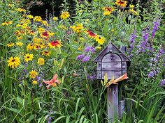 Black-eyed Susan flowers are wildflowers that can take the heat that radiates off the road in many mailbox gardens. You can choose from several wildflowers to get the spire-shaped growth habit like the purple flowers in this photo: Great blue lobelia, Wild lupine, Lavender hyssop, Prairie blazing star
