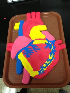 clay model of the heart