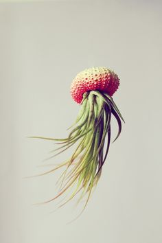 Cathy Van Hoang est directrice artistique dans la vie et occupe son temps libre à réaliser ces méduses à partir de coques d'oursin peintes et de plantes tr
