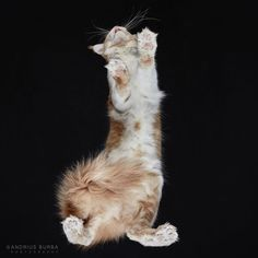 Cat from underneath By Andrius Burba