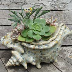 creative planters using seashells, succulents