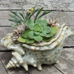 creative planters using seashells, succulents