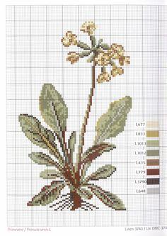 ru / Фото - Herbarium_DMC - by tammi Embroidery Motifs, Types Of Embroidery, Cross Stitch Embroidery, Cross Stitch Designs, Cross Stitch Patterns, Blackwork, Cross Stitch Kitchen, Cross Stitch Flowers, Cross Stitching