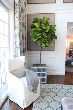 Habitually Chic®: Hamptons Designer Show House: Great Room. Fiddle leaf fig + framed sections of grasscloth.