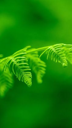 The latest iPhone11, iPhone11 Pro, iPhone 11 Pro Max mobile phone HD wallpapers free download, fern, leaf, macro, plant, green, bright - Free Wallpaper | Download Free Wallpapers