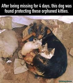 Baby Animals Pictures, Funny Animal Pictures, Animals And Pets, Wild Animals, Cute Little Animals, Cute Funny Animals, Cute Dogs, Mundo Animal, Tier Fotos
