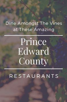 All about the award-winning wineries in Prince Edward County with delicious on-site restaurants. Canadian Passport, Canadian Travel, May Long Weekend, Patio Images, Ontario Travel, Prince Edward, Vacation Destinations, Vacations, Travel Inspiration