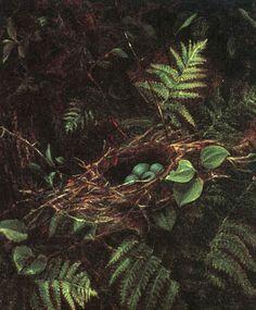 Bird's nest and ferns.