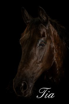 Tia Equestrian Portrait on black background Great Memories, Family Portraits, Black Backgrounds, Equestrian, Horses, Fine Art, Animals, Family Posing, Animales