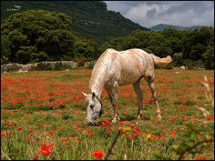 (480) En llibertat - Cavall en llibertat