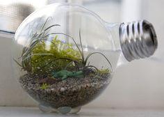 light bulb terrarium. How cute is this!