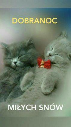 Good Night, Good Morning, Weekend Humor, Xmas Cards, Motto, Animals Beautiful, Clip Art, Funny, Poster