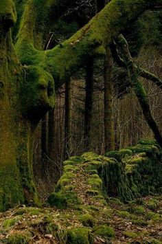 """yellowrose543:  """"Forest-https://weheartit.com/entry/226786945  """""""
