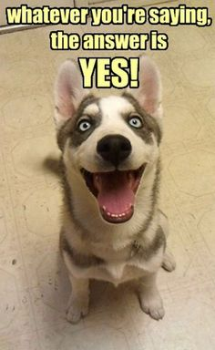 Every time when you talk to the dog.Whatever you're saying, the answer is YES!