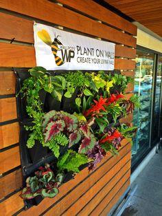 Livingwall planter Buy at Wallpots.com
