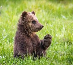 This is My Paw by Troy Harrison - Photo 116099819 / 500px