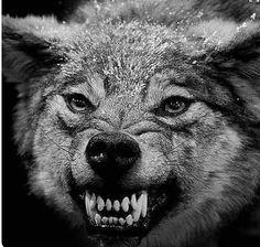 Love this badass wolf!!!!