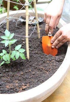 backyard designs – Gardening Ideas, Tips & Techniques Eco Garden, Tropical Garden, Garden Pots, Vegetable Garden, Grow Home, Comment Planter, Small Garden Design, Green Life, Fruit Trees