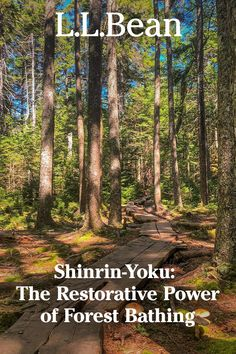 """Around the world, people celebrate and enjoy time outdoors in many different ways. Here's a primer on the Japanese practice of Shinrin-Yoku, or """"forest bathing"""" – and how it can help you reconnect to your body and the world around you. Beautiful Landscape Wallpaper, Beautiful Landscapes, Nature Pictures, Cool Pictures, Shinrin Yoku, Pinturas Disney, Forest Bathing, Forest Path, Chinese Landscape"""